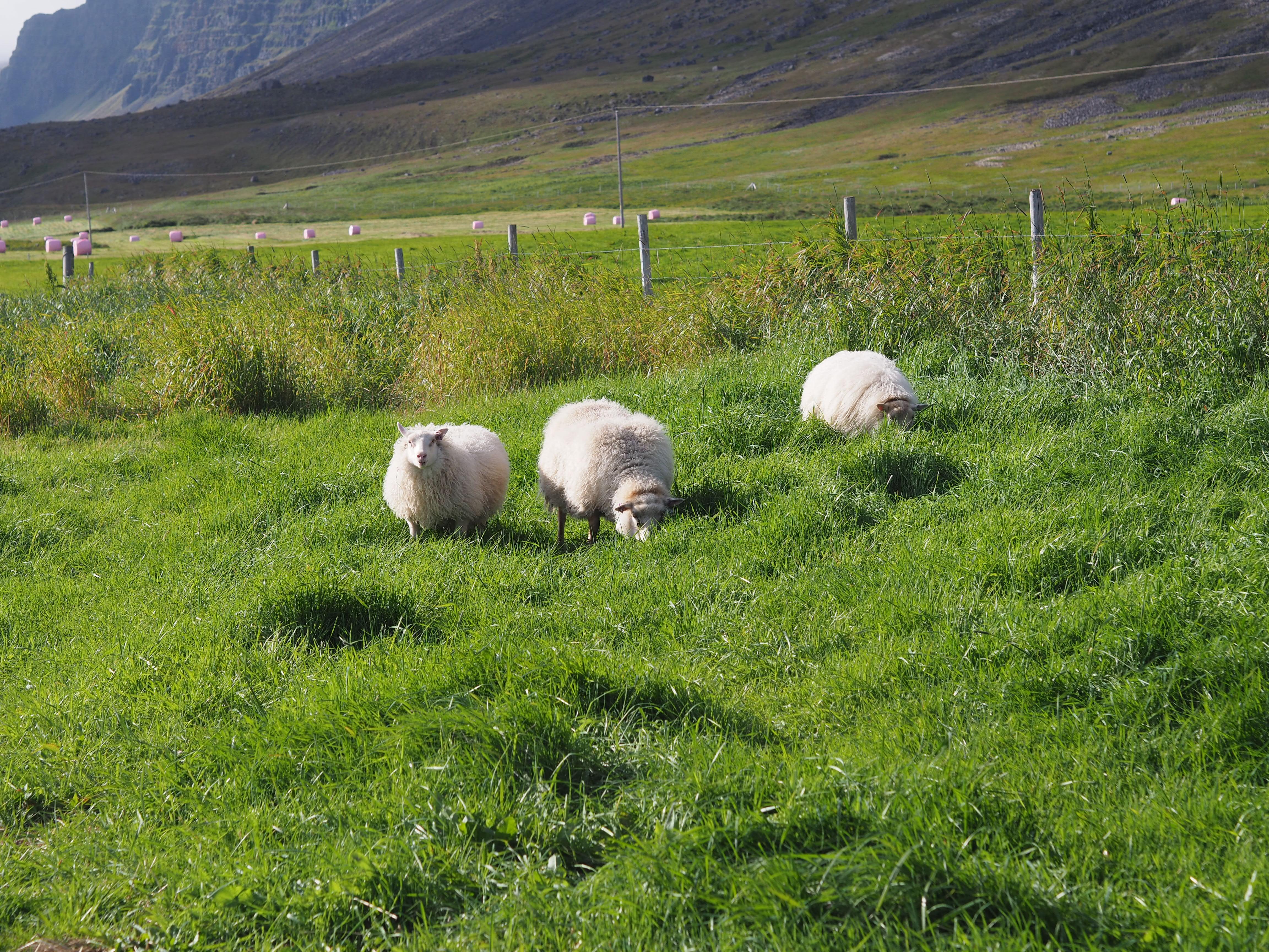 island Iceland průvodce po islandu